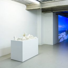 Marcus Coates: The Last of Its Kind @Workplace London, London  - GalleriesNow.net
