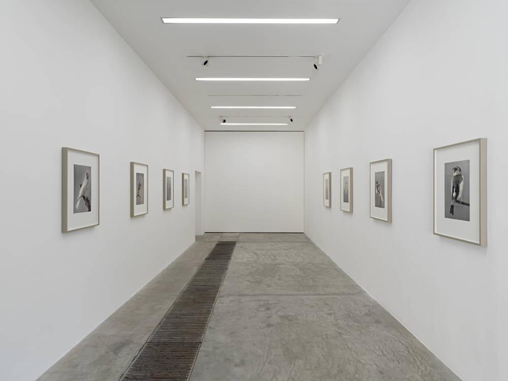 Galleria Continua Beijing Carsten Holler 5