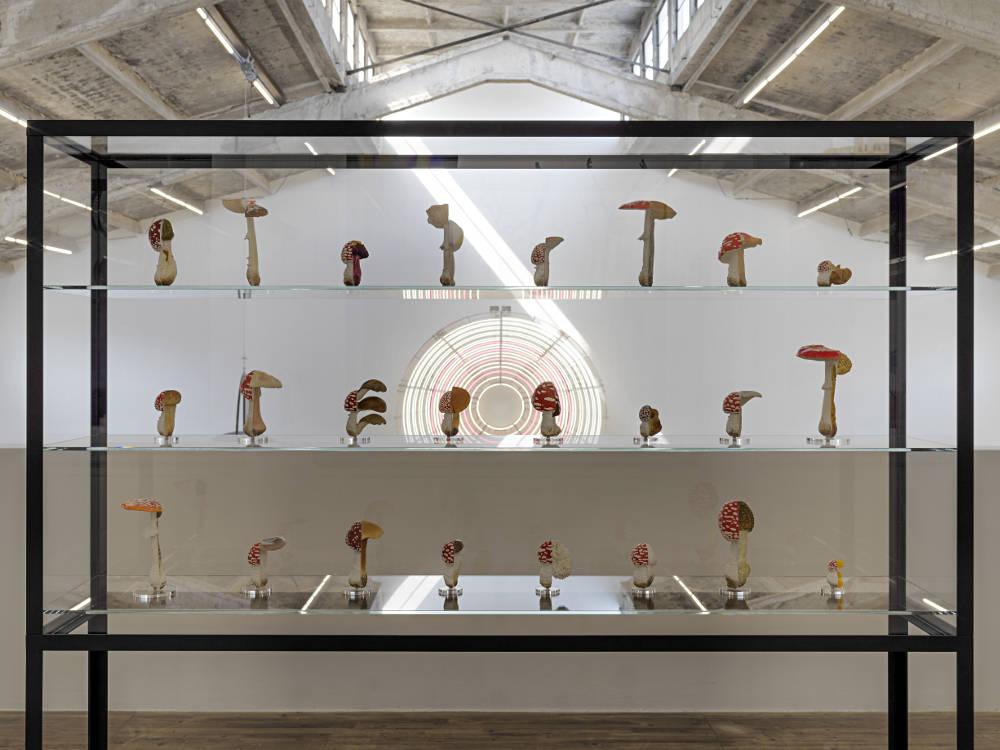 Galleria Continua Beijing Carsten Holler 6