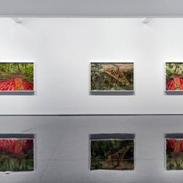 Rosemary Laing: Buddens @Tolarno Galleries, Melbourne  - GalleriesNow.net