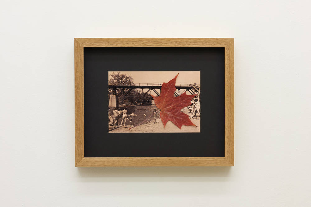 Ginte Regina, A Souvenir, 2017. Postcard with maple leaf, 14.8 x 10.5cm