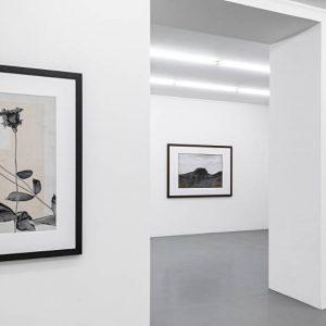 Thomas Ruff: tripe & flower.s @Mai 36 Galerie, Zürich  - GalleriesNow.net