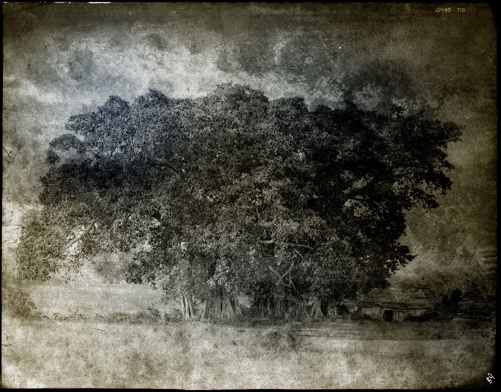 Thomas Ruff, tripe_11 Mysore. Landscape with banyan trees., 2018. C-print, edition of 6 + 2 AP, ed. 2/6, image 81 x 104 cm (31 7/8 x 41 in.) framed 123.5 x 159.5 cm (48 5/8 x 62 3/4 in.) verso signed and dated
