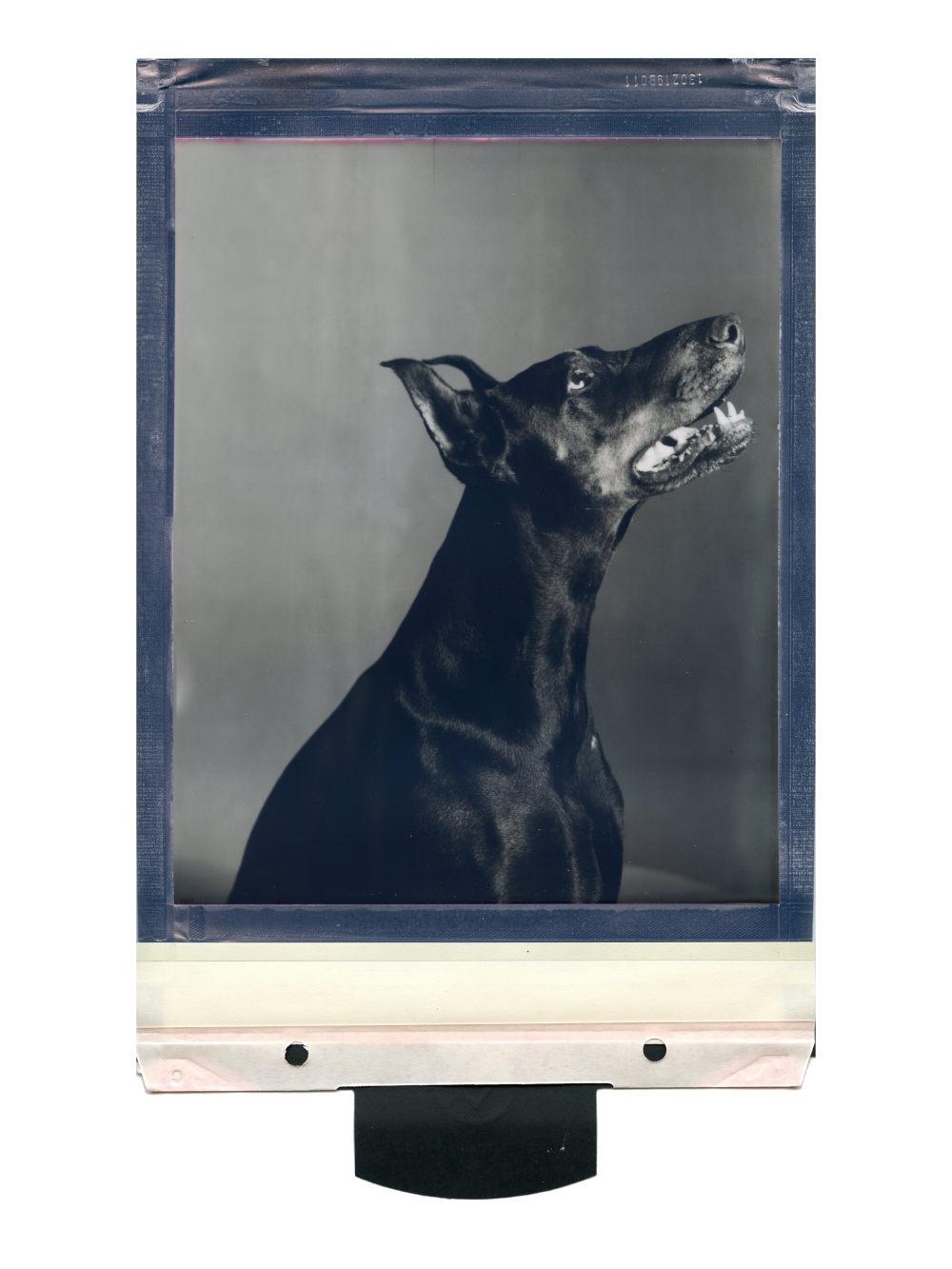 Massimiliano Muner, Pu94, 2019. Instant film, monochrome 8 x 10cm, polaroid originals