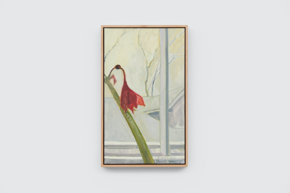 Lois Dodd, Fading Amaryllis, 2014, oil on Masonite, 38.1 x 22.5  cm, 15 x 8 7/8 ins. Photo: Ben Westoby. © the artist. Courtesy Modern Art, London & Alexandre Gallery
