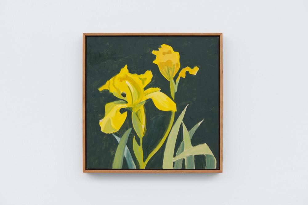 Lois Dodd, Yellow Iris, 2006, oil on Masonite, 29.8 x 29.8 cm, 11 3/4 x 11 3/4 ins. Photo: Ben Westoby. © the artist. Courtesy Modern Art, London & Alexandre Gallery