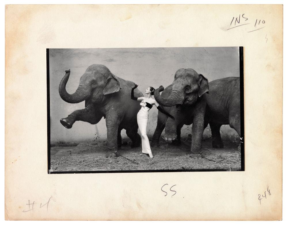 Dovima with elephants, evening dress by Dior, Cirque d´Hiver, Paris