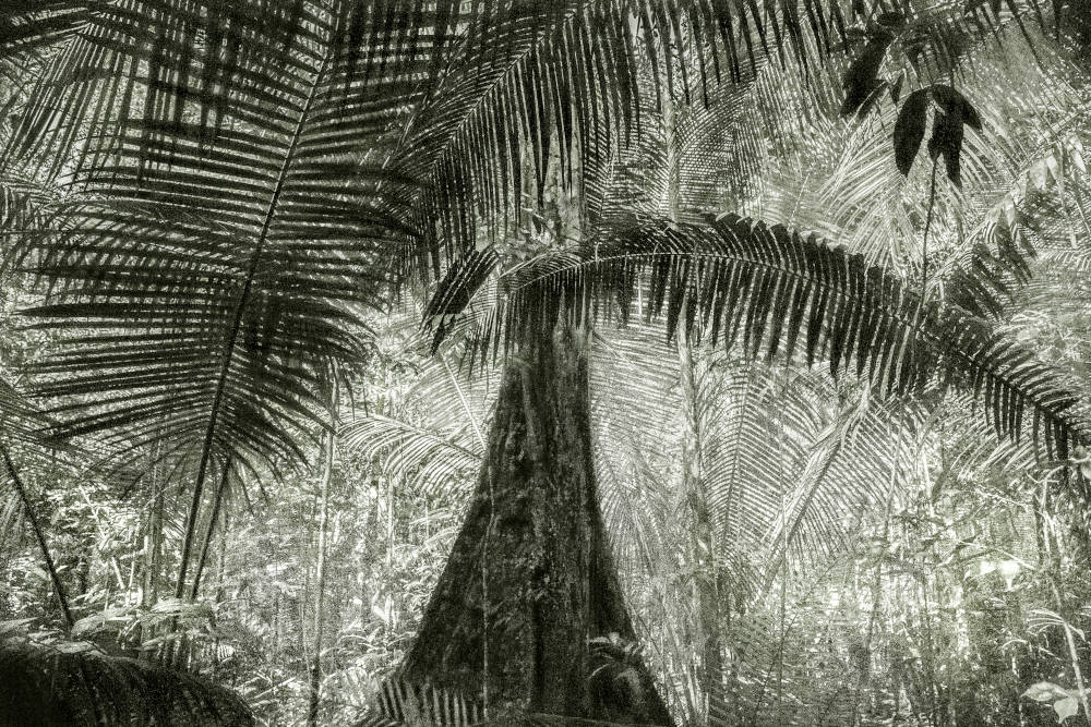 A Picturesque Voyage Through Brazil #28