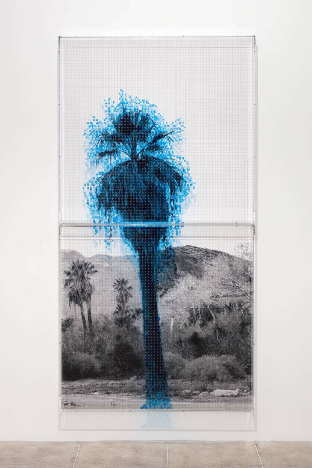 Numbers and Trees: Palm Canyon, Palm Trees Series 2, Tree #1, Cahuilla