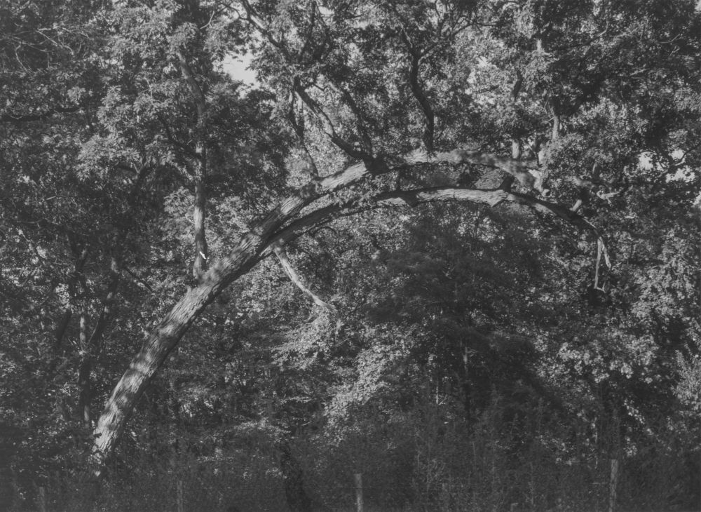 Curved branch