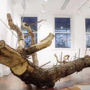 Resurrect: Quercus Robur, 1810-2019 @Alice Black, London  - GalleriesNow.net
