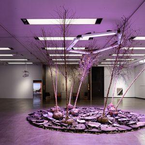 Kunsthalle Wien Prize 2019 @Kunsthalle Wien Museumsquartier, Vienna  - GalleriesNow.net