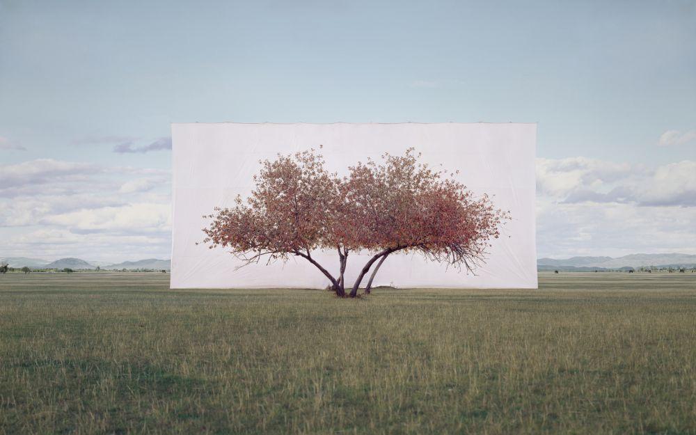 Tree... #2