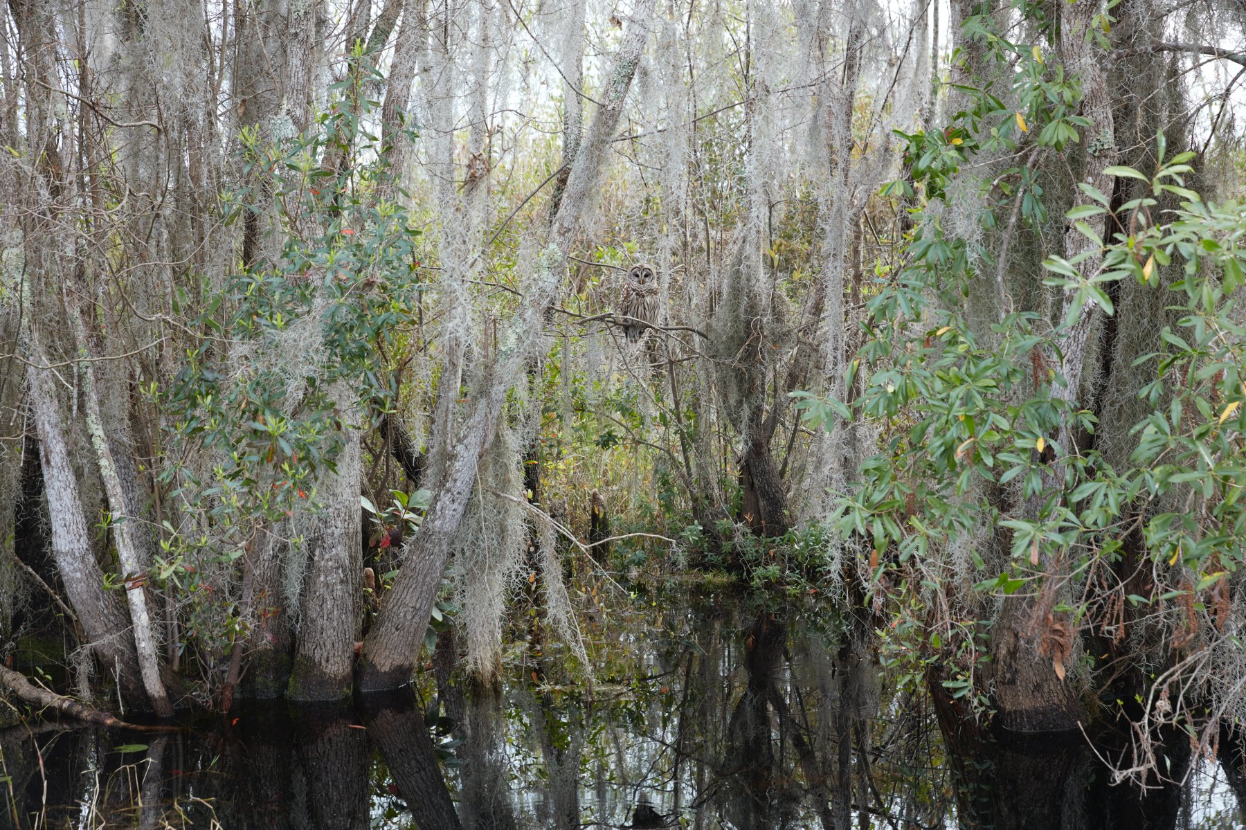 Untitled #1 (Swamps)