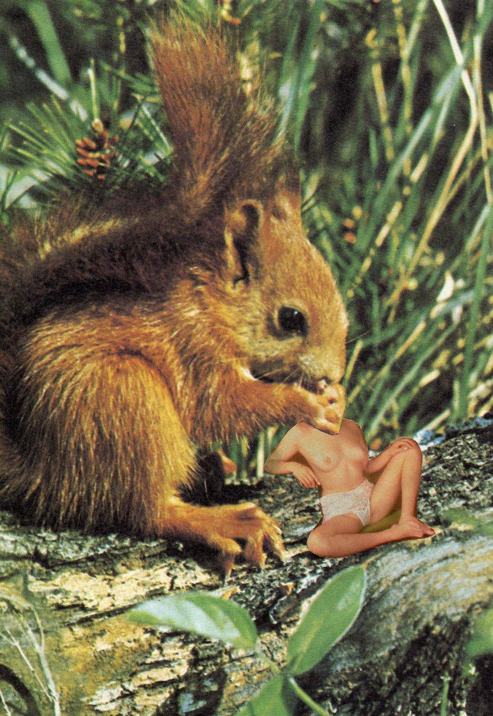 Squirrel Snack