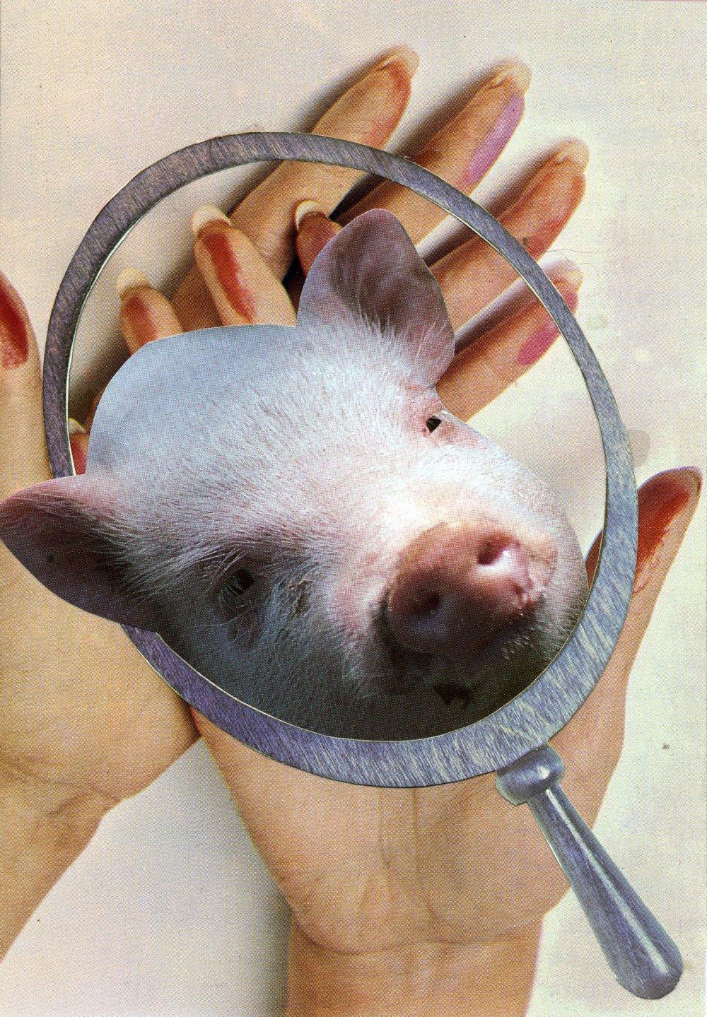 Pig Reflection