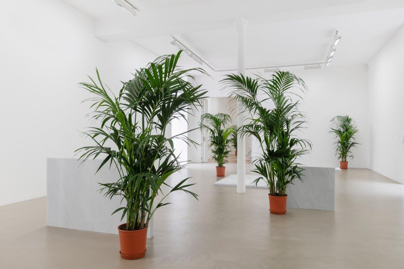 Galerie Chantal Crousel Rirkrit Tiravanija 3